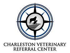 Electroporator Onkodisruptor charleston veterinary