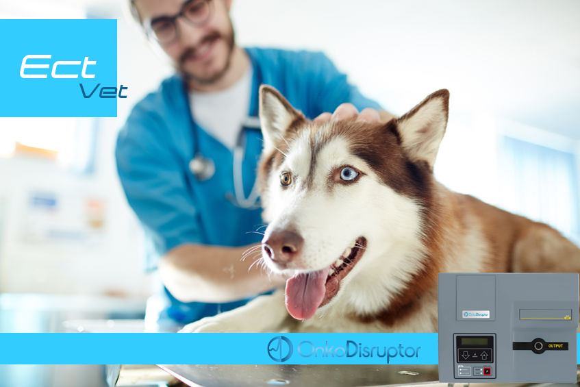OnkoDisruptor ECT-Vet Electroporator in Electrochemotherapy Veterinary